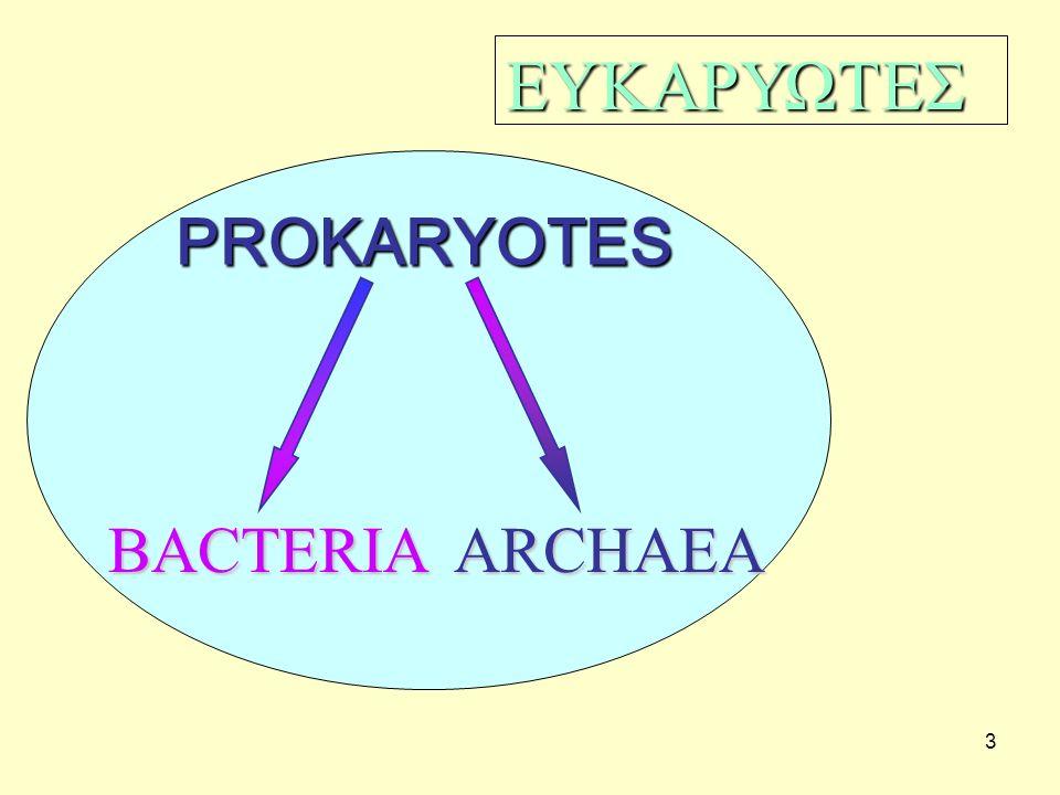 ΕΥΚΑΡΥΩΤΕΣ PROKARYOTES BACTERIA ARCHAEA 3
