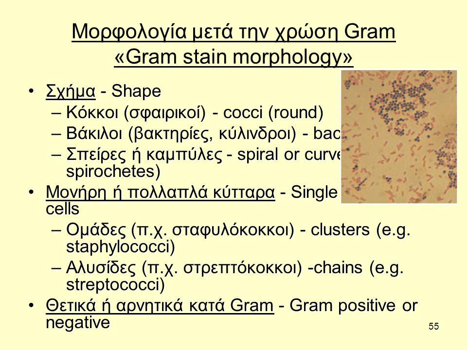 Μορφολογία μετά την χρώση Gram «Gram stain morphology»