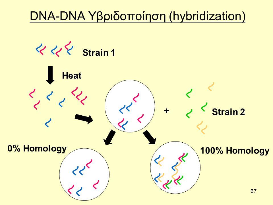 DNA-DNA Υβριδοποίηση (hybridization)