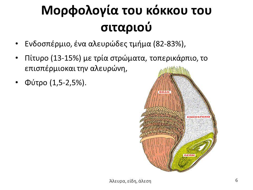Μορφολογία του κόκκου του σιταριού