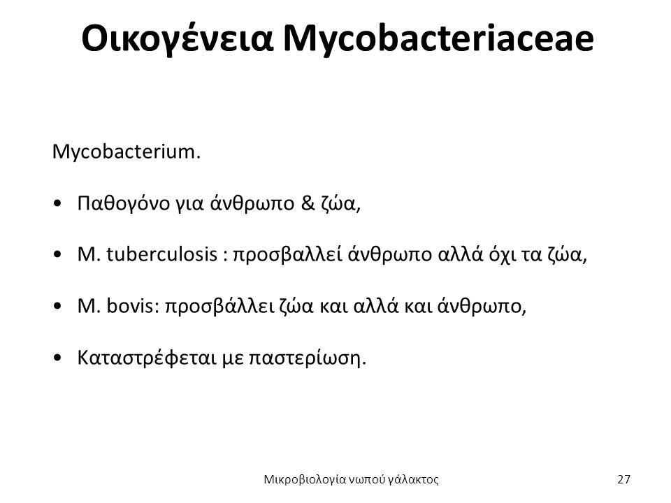 Οικογένεια Mycobacteriaceae
