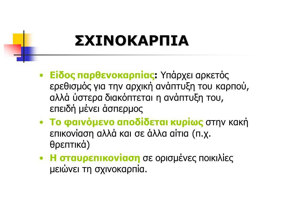ΣΧΙΝΟΚΑΡΠΙΑ