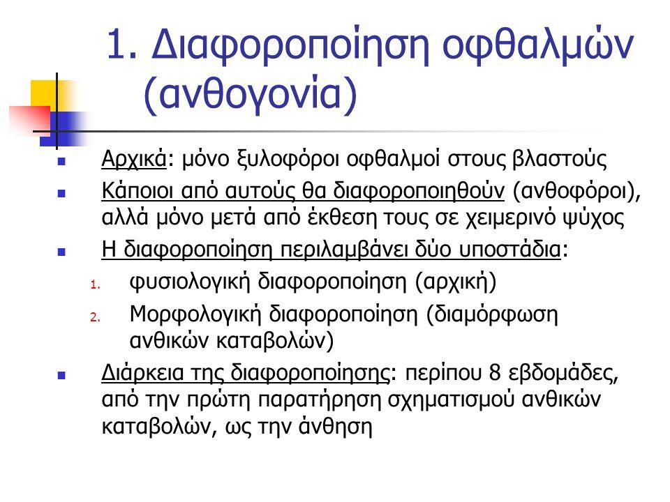 1. Διαφοροποίηση οφθαλμών (ανθογονία)