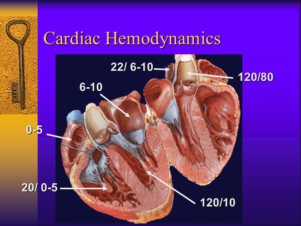 Cardiac Hemodynamics 22/ 6-10 120/80 6-10 0-5 20/ 0-5 120/10 42