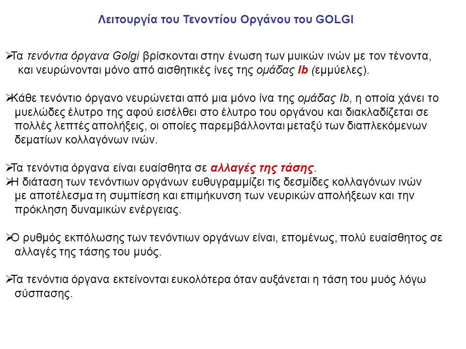 Λειτουργία του Τενοντίου Οργάνου του GOLGI