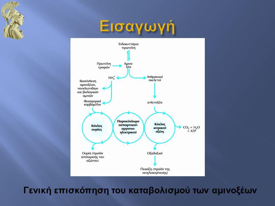 Εισαγωγή Γενική επισκόπηση του καταβολισμού των αμινοξέων