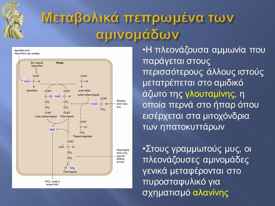 Μεταβολικά πεπρωμένα των αμινομάδων