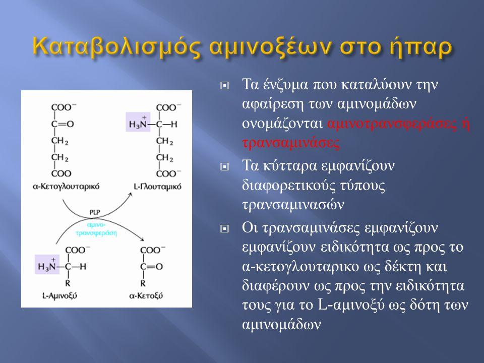 Καταβολισμός αμινοξέων στο ήπαρ