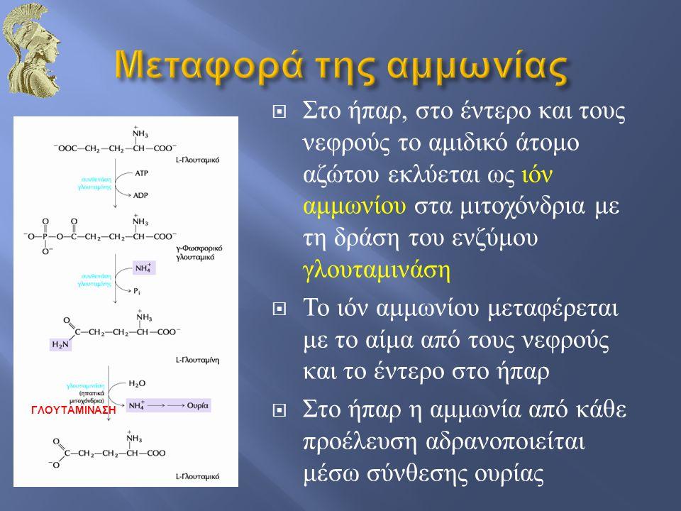 Μεταφορά της αμμωνίας