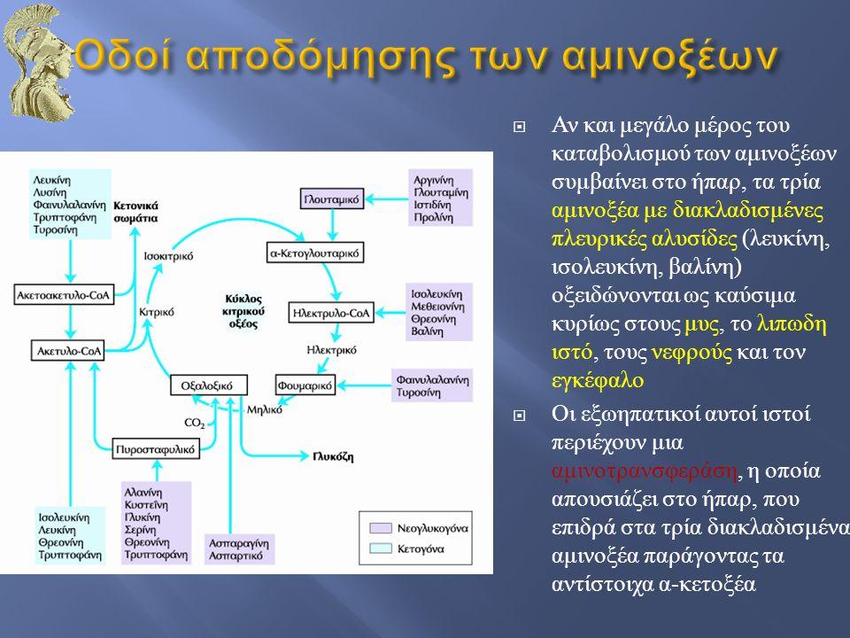 Οδοί αποδόμησης των αμινοξέων