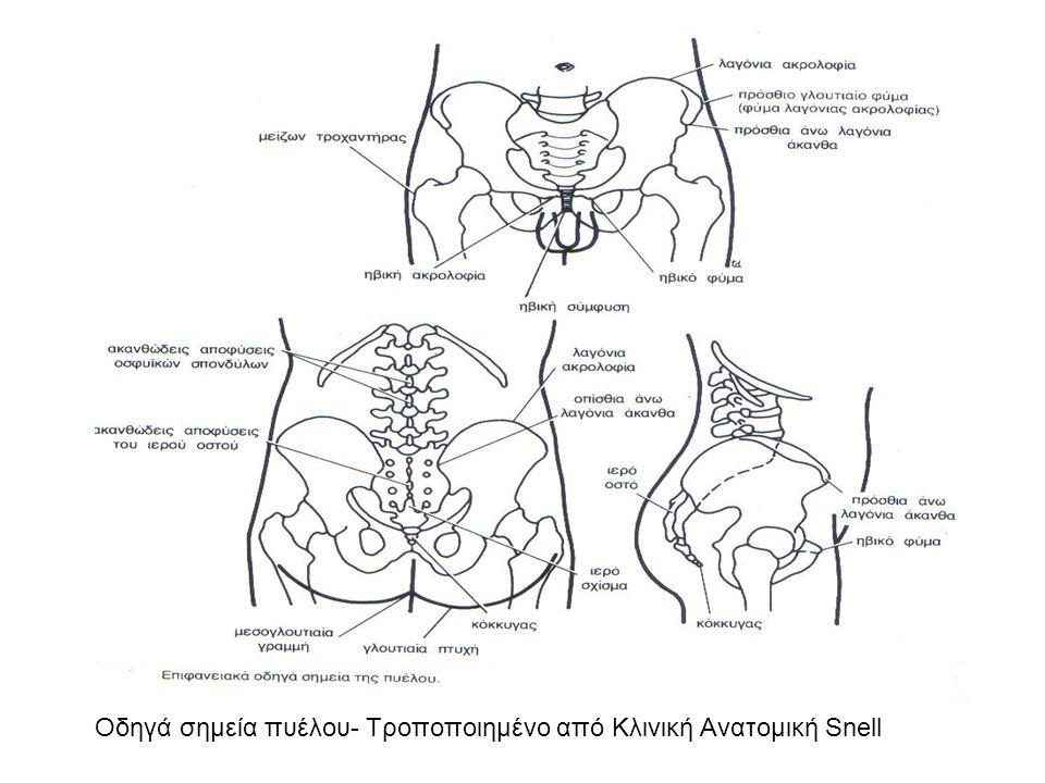 Οδηγά σημεία πυέλου- Τροποποιημένο από Κλινική Ανατομική Snell