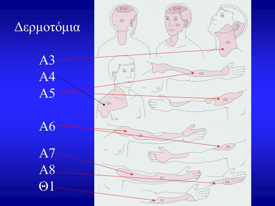Δερμοτόμια Α3 Α4 Α5 Α6 Α7 Α8 Θ1