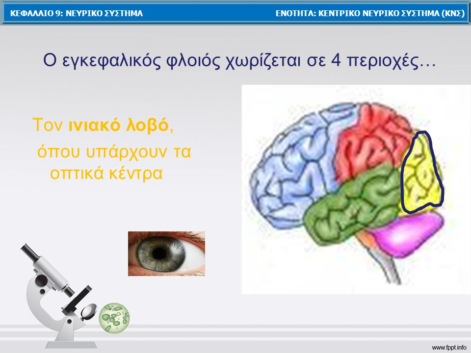 Ο εγκεφαλικός φλοιός χωρίζεται σε 4 περιοχές…