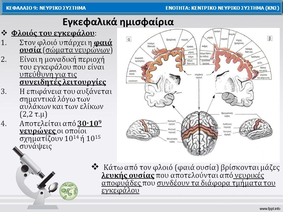 Εγκεφαλικά ημισφαίρια