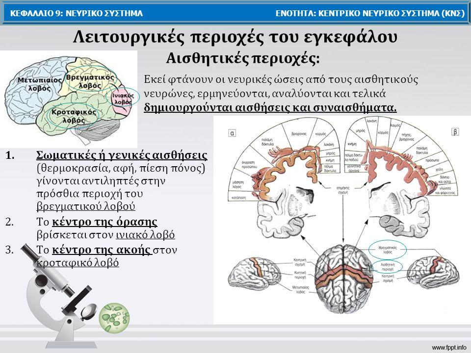 Λειτουργικές περιοχές του εγκεφάλου