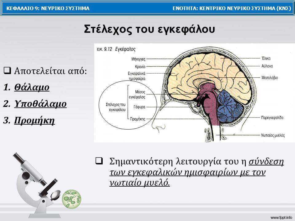 Στέλεχος του εγκεφάλου