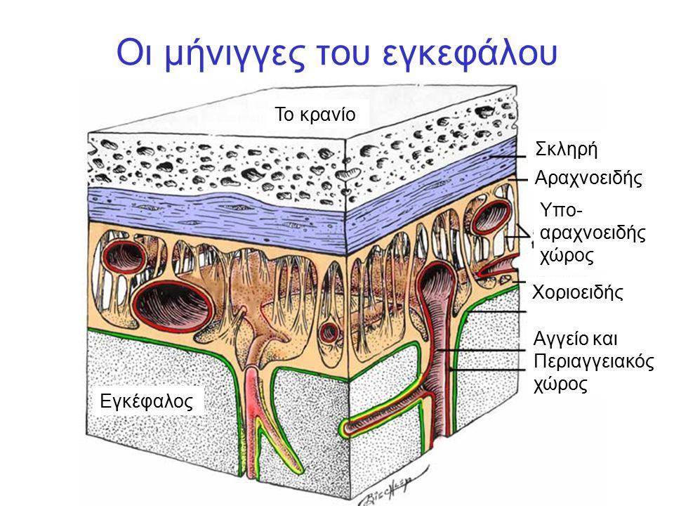 Οι μήνιγγες του εγκεφάλου