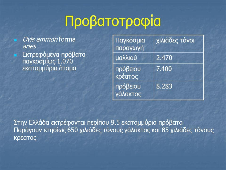 Προβατοτροφία Ovis ammon forma aries