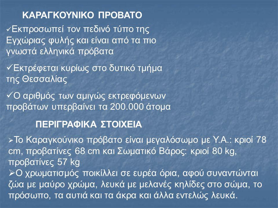 ΚΑΡΑΓΚΟΥΝΙΚΟ ΠΡΟΒΑΤΟ ΠΕΡΙΓΡΑΦΙΚΑ ΣΤΟΙΧΕΙΑ