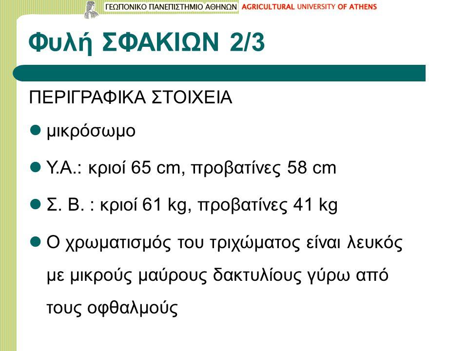 Φυλή ΣΦΑΚΙΩΝ 2/3 ΠΕΡΙΓΡΑΦΙΚΑ ΣΤΟΙΧΕΙΑ μικρόσωμο