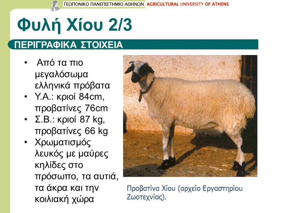 Φυλή Χίου 2/3 ΠΕΡΙΓΡΑΦΙΚΑ ΣΤΟΙΧΕΙΑ