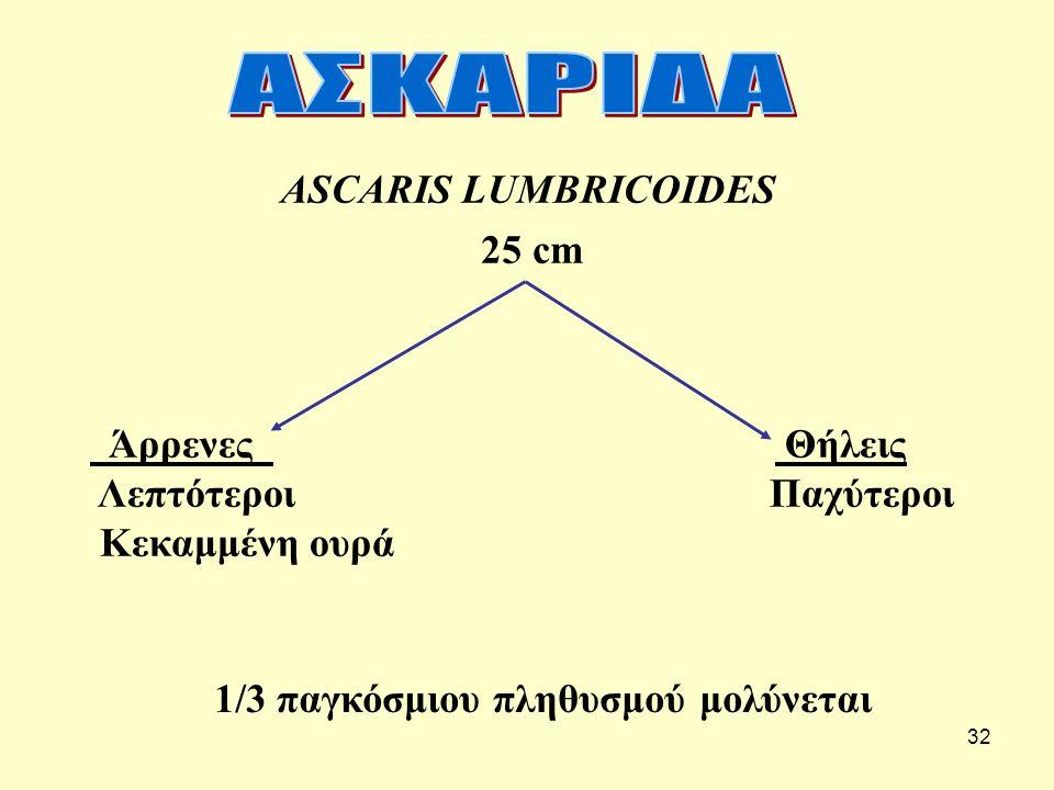 ΑΣΚΑΡΙΔΑ ASCARIS LUMBRICOIDES. 25 cm. Άρρενες Θήλεις.