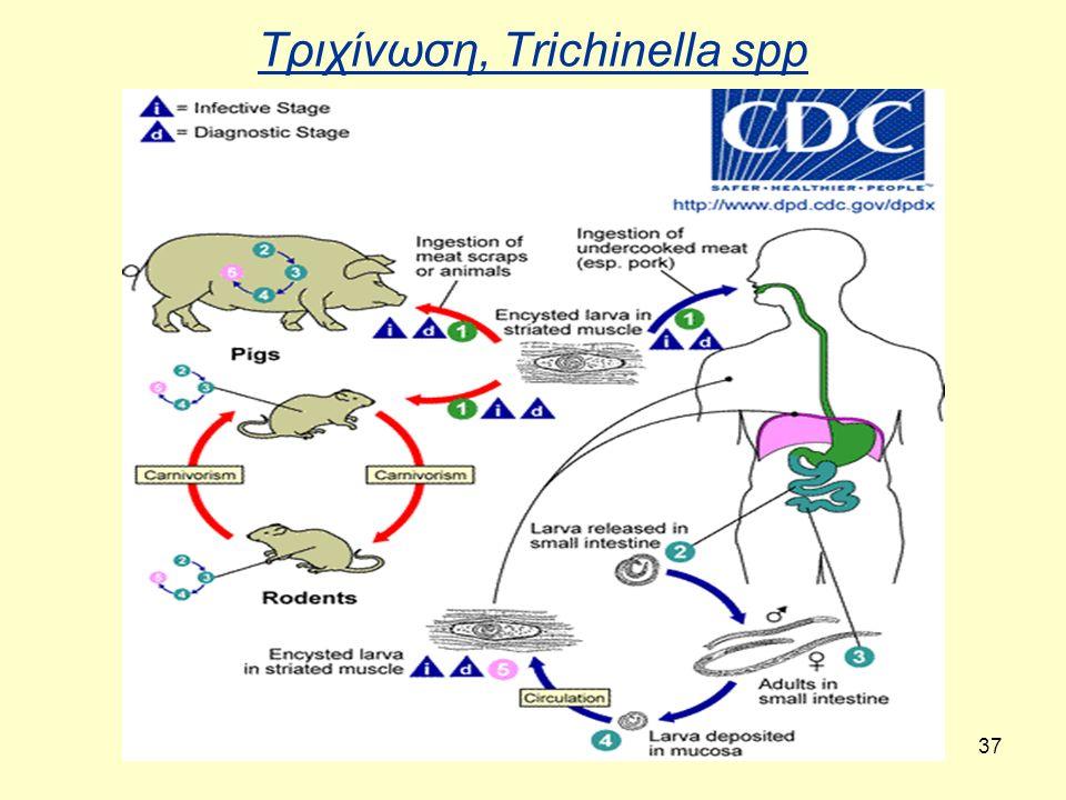 Τριχίνωση, Trichinella spp