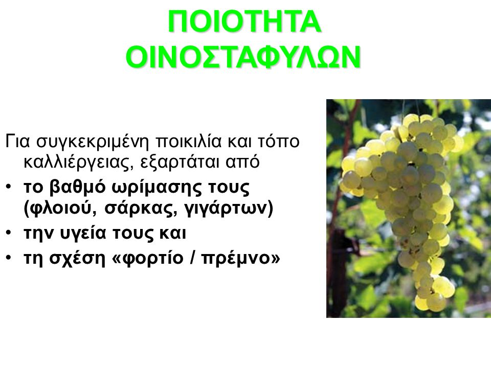 ΠΟΙΟΤΗΤΑ ΟΙΝΟΣΤΑΦΥΛΩΝ