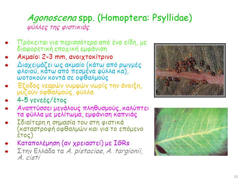 Agonoscena spp. (Homoptera: Psyllidae) ψύλλες της φιστικιάς