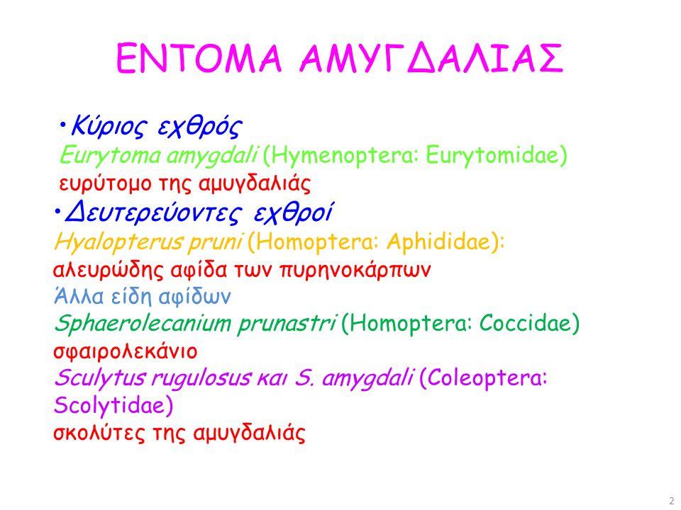 ΕΝΤΟΜΑ ΑΜΥΓΔΑΛΙΑΣ Κύριος εχθρός Eurytoma amygdali (Hymenoptera: Eurytomidae) ευρύτομο της αμυγδαλιάς.