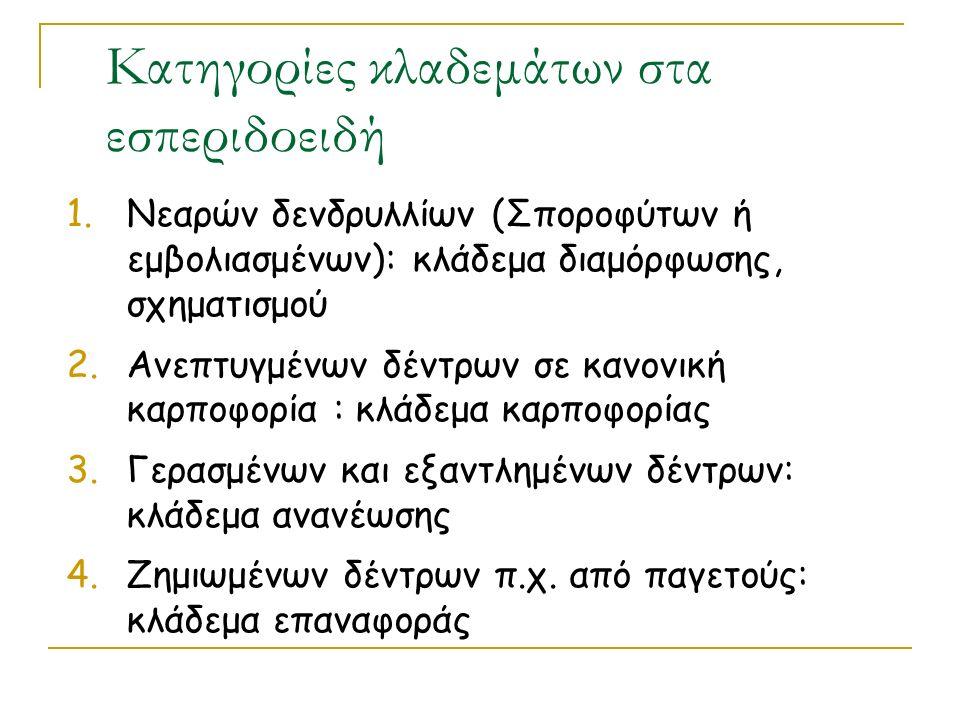 Κατηγορίες κλαδεμάτων στα εσπεριδοειδή