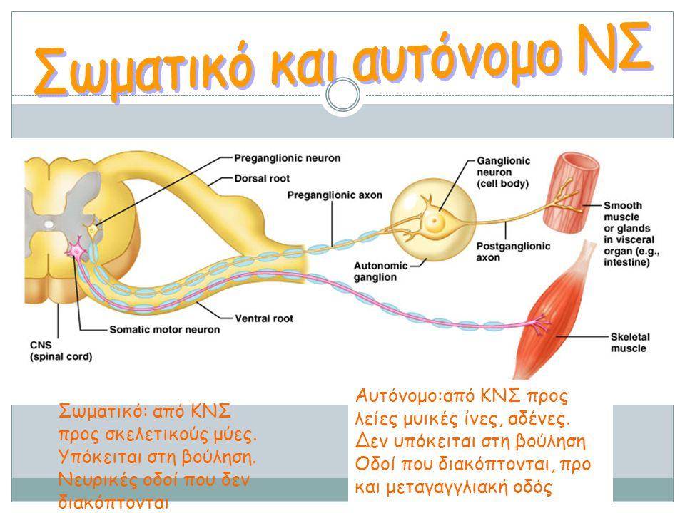 Σωματικό και αυτόνομο ΝΣ