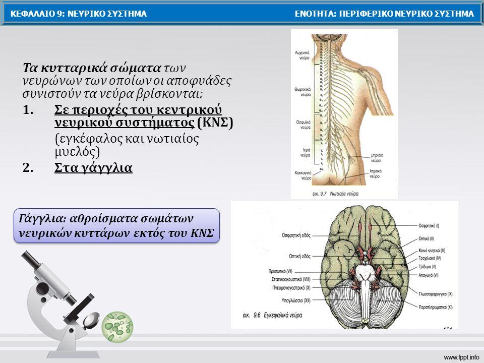 Σε περιοχές του κεντρικού νευρικού συστήματος (ΚΝΣ)