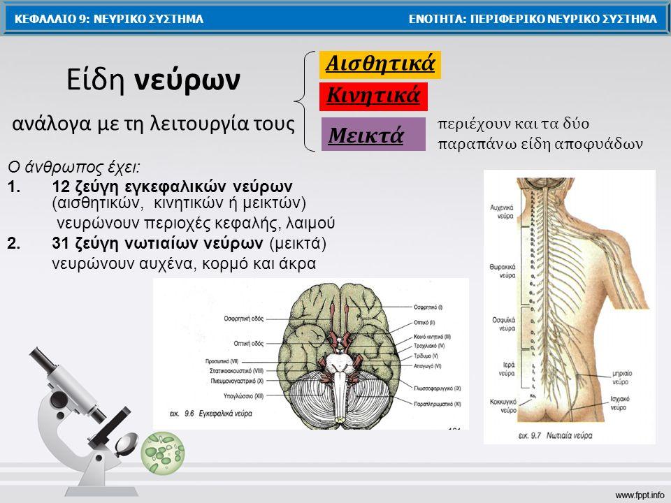 Είδη νεύρων ανάλογα με τη λειτουργία τους