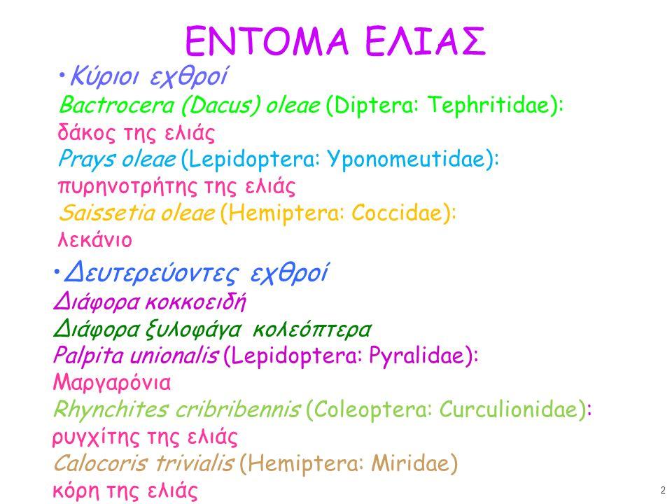ΕΝΤΟΜΑ ΕΛΙΑΣ Κύριοι εχθροί Bactrocera (Dacus) oleae (Diptera: Tephritidae): δάκος της ελιάς Prays oleae (Lepidoptera: Yponomeutidae):