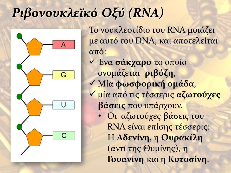 Ριβονουκλεϊκό Οξύ (RNA)