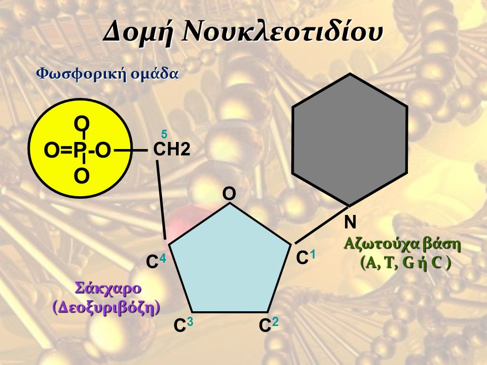 Δομή Νουκλεοτιδίου O O=P-O N CH2 O C1 C4 C3 C2 Φωσφορική ομάδα