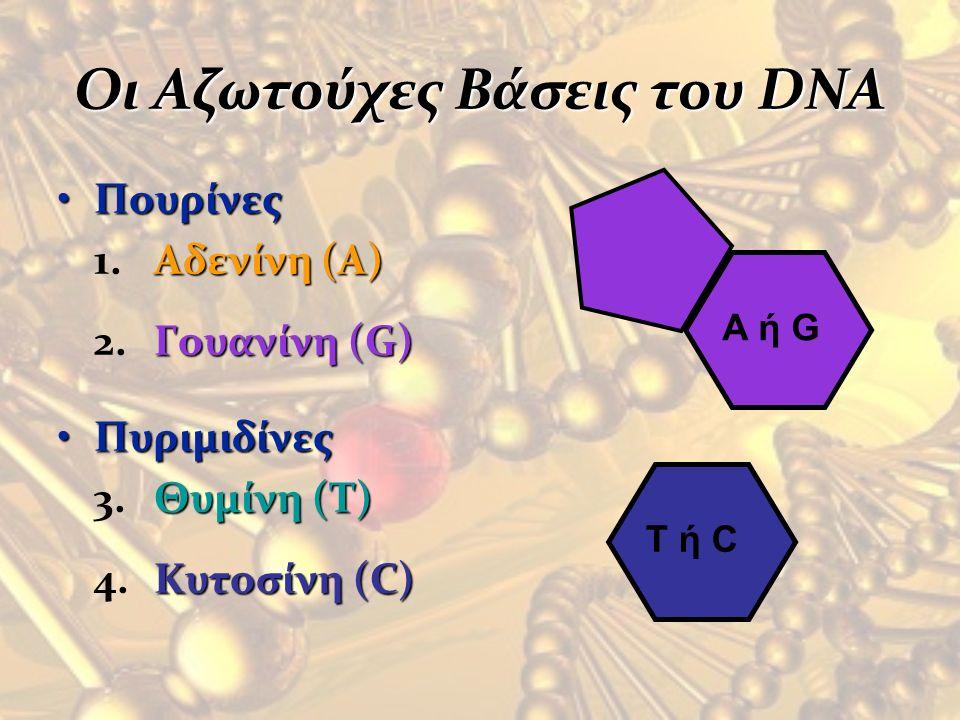 Οι Αζωτούχες Βάσεις του DNA
