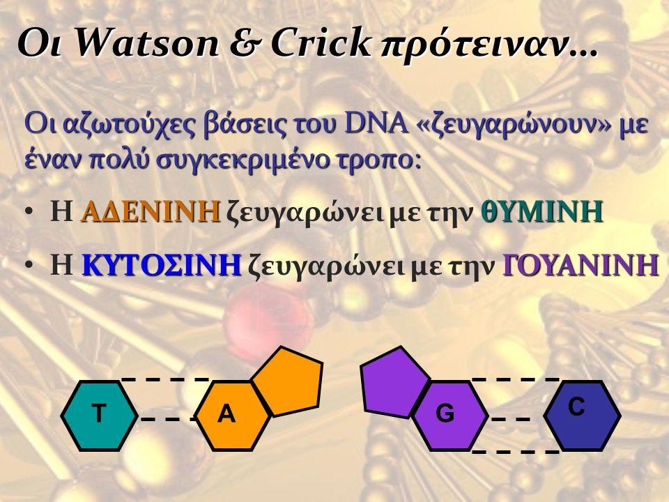 Οι Watson & Crick πρότειναν…