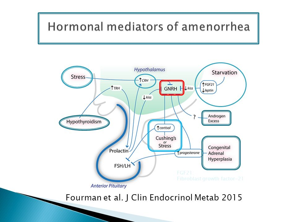 Hormonal mediators of amenorrhea