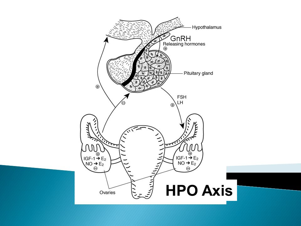 GnRH HPO Axis