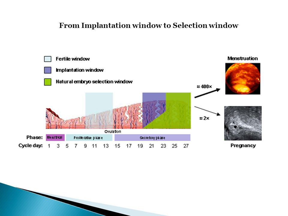 From Implantation window to Selection window