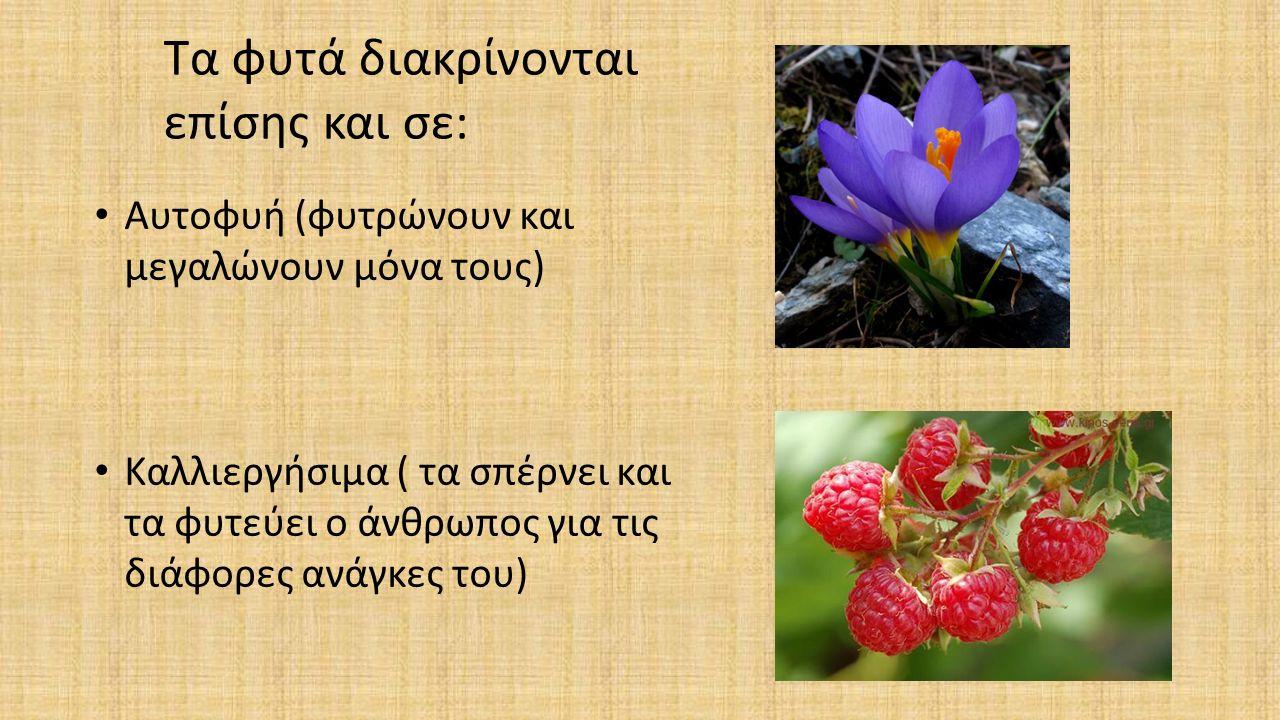 Τα φυτά διακρίνονται επίσης και σε: