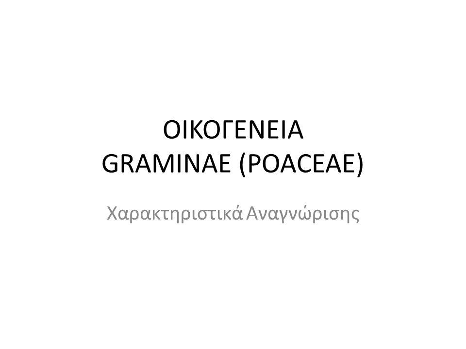 ΟΙΚΟΓΕΝΕΙΑ GRAMINAE (POACEAE)