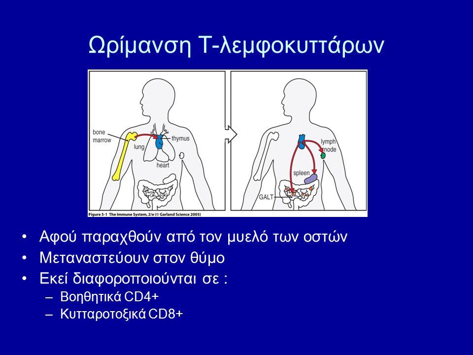 Ωρίμανση Τ-λεμφοκυττάρων