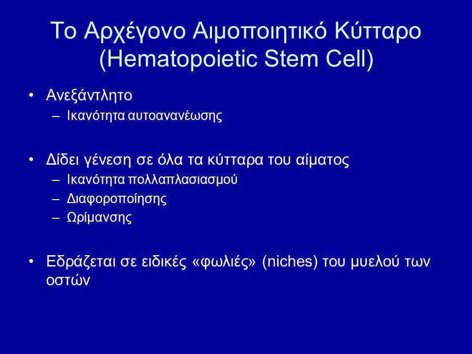 Το Αρχέγονο Αιμοποιητικό Κύτταρο (Hematopoietic Stem Cell)