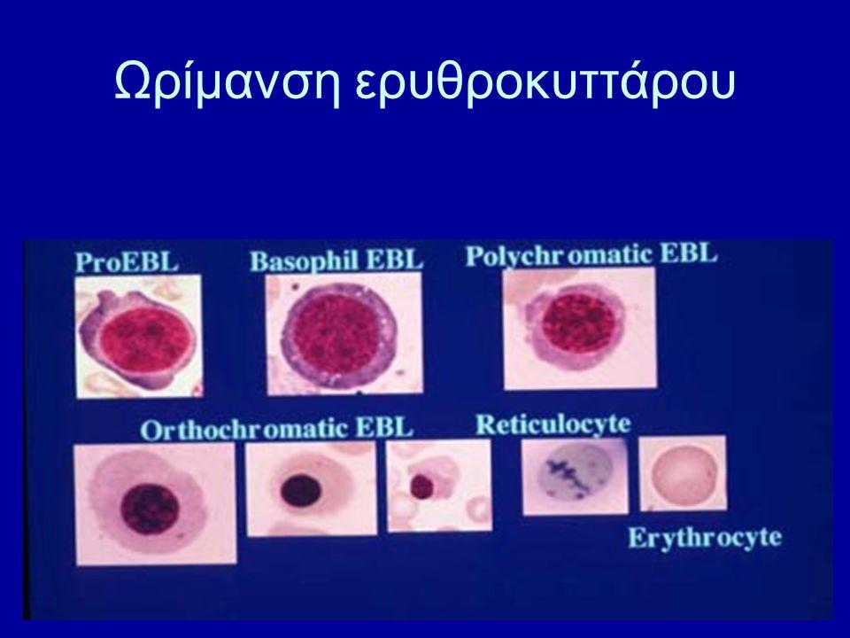 Ωρίμανση ερυθροκυττάρου