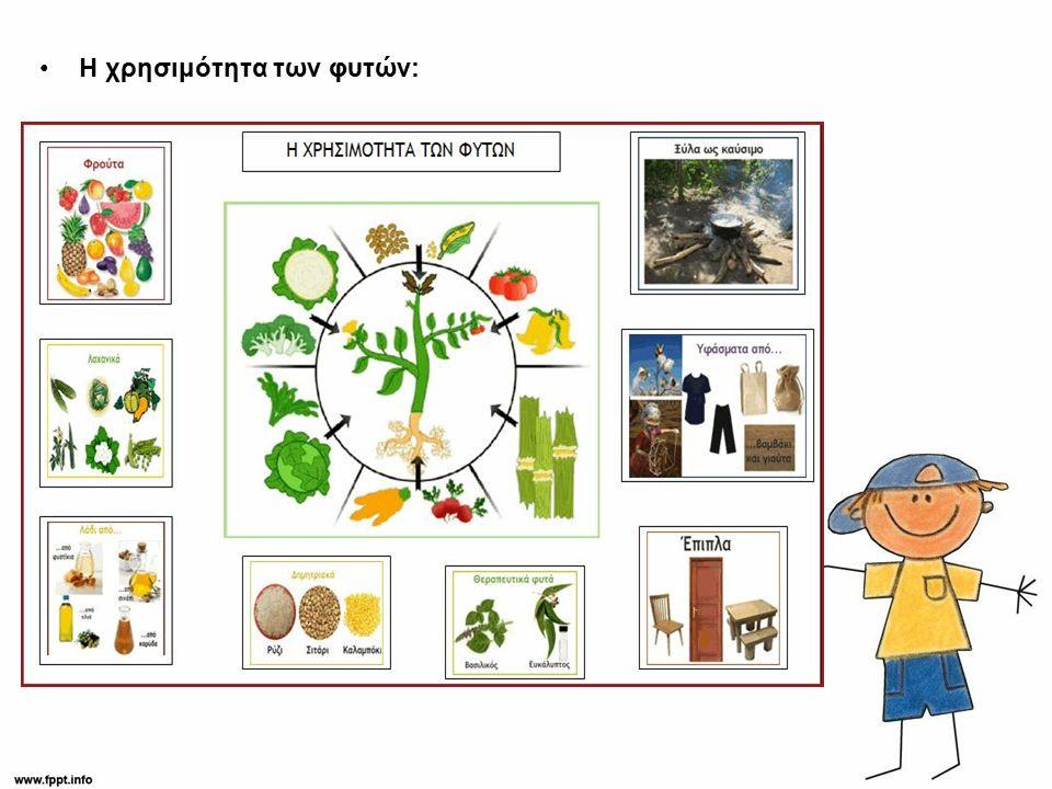 Η χρησιμότητα των φυτών: