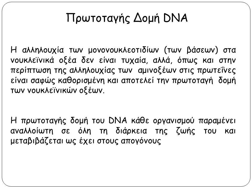 Πρωτοταγής Δομή DNA