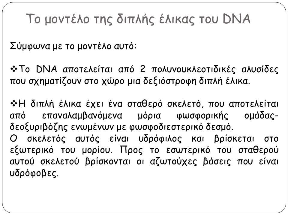 Το μοντέλο της διπλής έλικας του DNA